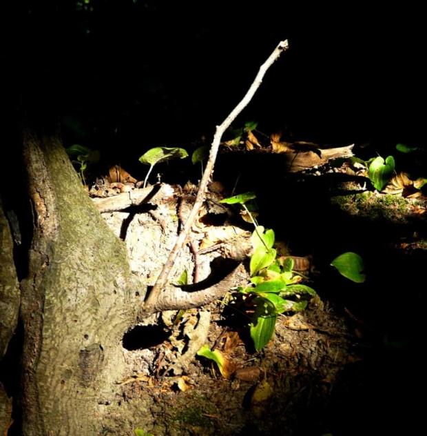 Światło w cieniu #Światło #las