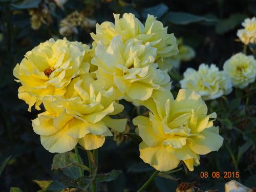 http://images66.fotosik.pl/1112/cffa2b1794c7e422med.jpg