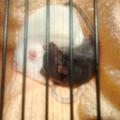 Vegas i Sammy 2 #szczur #szczury