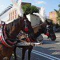 Konie krakowskiego dorożkarza #Konie #Kraków