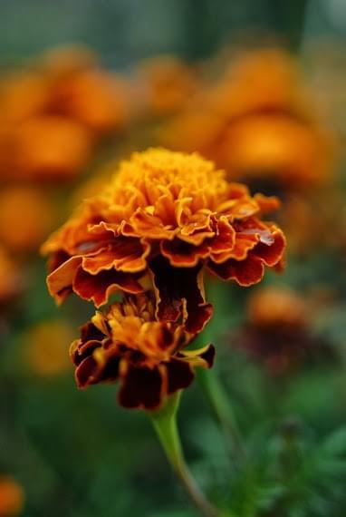 #kwiat #pies #poprzedni #rok