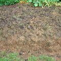 kompostownik #kompostownik #nasturcje #pryzma #trawa
