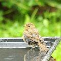 #krajobrazy #ptaki #rośliny #zwierzęta