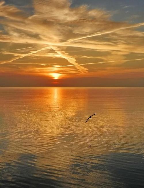 ...pewnego ranka #wschód #ptak #morze
