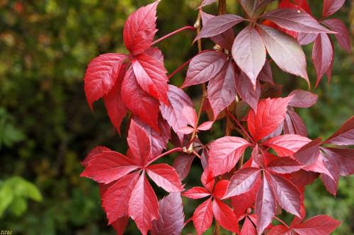jesień #jesień #przyroda
