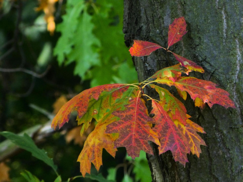 Jesień się zaczyna #jesień #drzewa