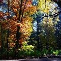 #jesień #drzewa #przyroda #kolory #natura
