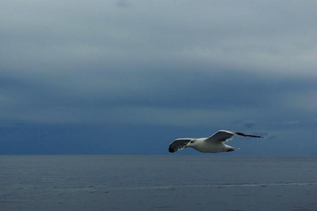mewa #morze #Grecja #wakacje #mewa