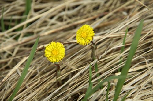 kwiecień #flora #przyroda #widoki