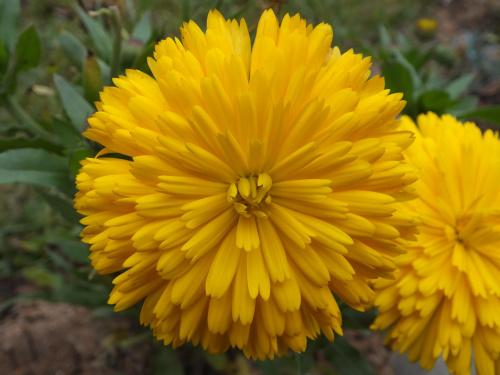 Słonecznym kwiatkiem dziękuję wszystkim za życzenia i pamięć :) Pozdrawiam Was słonecznie i cieplutko :)
