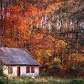 #Jesień #las #liście #natura #przyroda