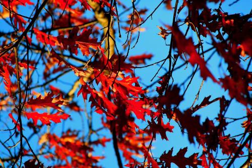 wrzesień #jesien #przyroda #widoki