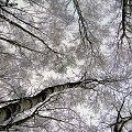 #Zima #las #drzewa