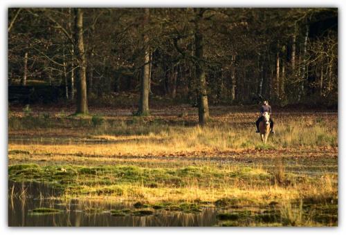 na niedzielnym spacerze #las