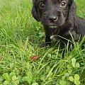 ralf #pies #ralf #słodziak #szczeniak