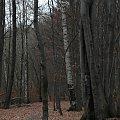 Zajęcia z fotografioi UTW #drzewa #Przyroda