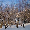 #drzewa #zima