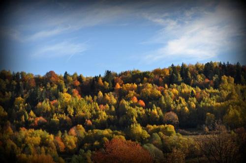 Kamesznica - Beskid Śląski #kamesznica #beskidy #BeskidŚląski #BaraniaGóra