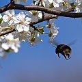 Nadchodzi wiosa #ptaki #owady #liście #wiosna #wojtekwrzesień #wojtekwrzesien #WojciechWrzesień #Fotmart