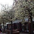 #wiosna #wiśnie #drzewa #przyroda