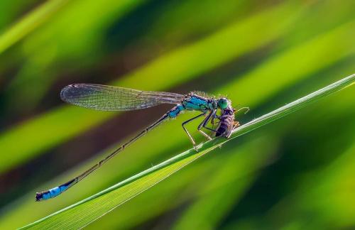 zdobycz #kwiaty #las #makro #motyle #owady #przyroda #zwierzęta