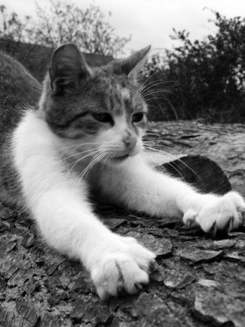 Miauczurek... #Koty #natura #Polska #przyroda