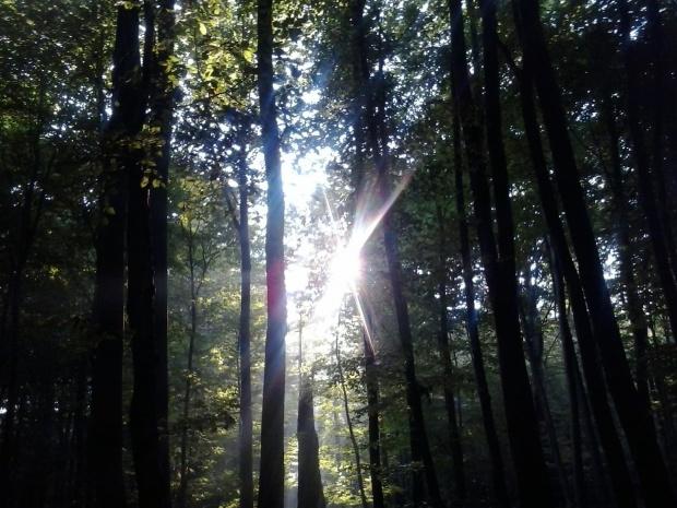Las #las #światło