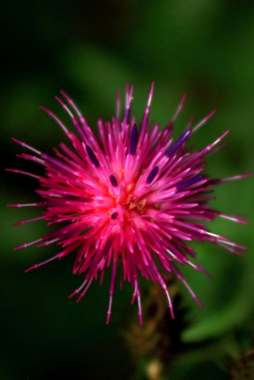 kwiat #makro #Przyroda #zwierzęta