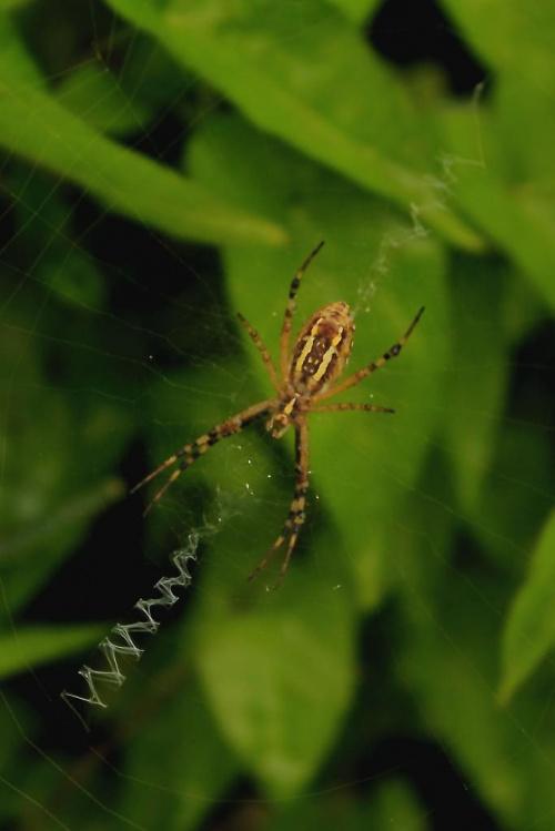 pająk #makro #Przyroda #zwierzęta