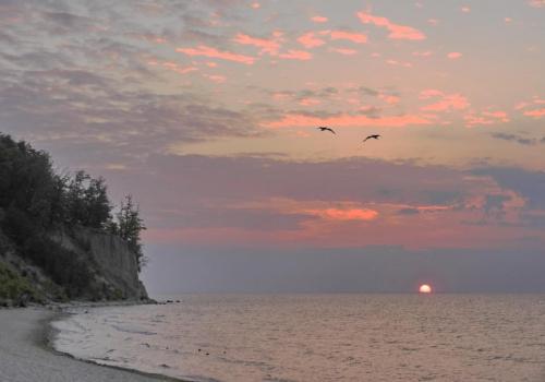 Witaj, dniu, pod klifem, nad klifem i w całej przestrzeni #Orłowo #klif #zatoka #wschód #ptak #ptaki