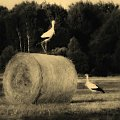#bociany #krajobrazy #przyroda #zwierzęta